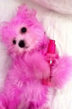WHAT AN AWFUL IDEA! The dip-dye summer hair trend is spreading to our puppies…and just in time for the Olympics! Dog Hair Dye, Dog Dye, Perfect Pink, Pretty In Pink, Colorful Animals, Cute Animals, Cute Puppies, Cute Dogs, Creative Grooming