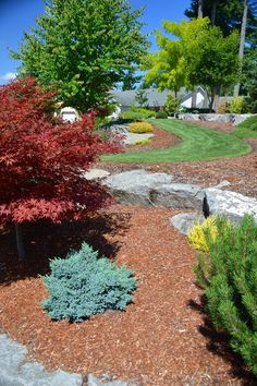 Low Maintenance, Low Water Landscaping Ideas with minimal grass.