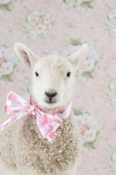 Sweet spring shabby lamb dressed in her pink bow