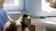 Monkey and Bubbles