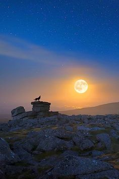 Nature Aesthetic, Animal Species, Beautiful Moon, Lone Wolf, Moonlight, Aesthetic Wallpapers, Northern Lights, Sunrise, Beautiful Pictures