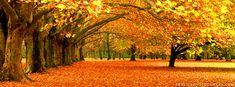Autumn Trees Facebook Cover