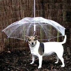 $9.95 Pet Umbrella (Dog Umbrella) | Cool People Shop