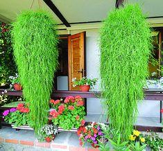 Celý obchod | Lebiš - Zahradnictví Boskovice
