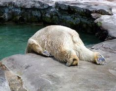 like me after a rough day at work