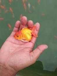 Unduh 92 Gambar Kolam Ikan Arwana Terpopuler