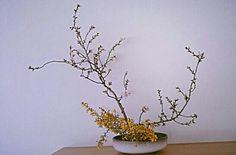 Almendros en flor en enero