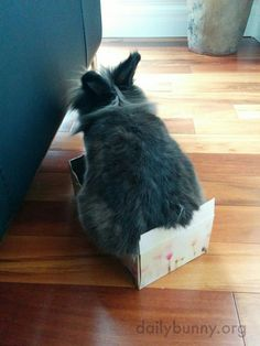 If I fits, I sits - April 7, 2016 - More at today's Daily Bunny post: http://dailybunny.org/2016/04/07/if-i-fits-i-sits/