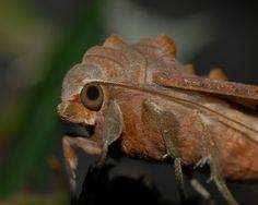 Gepind vanaf vroegevogels.vara.nl - Agaatvlinder