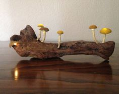 Cogumelos Mágicos Luminosos Decorativos by FernaHandMade on Etsy