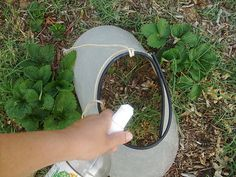 Homemade Weed Killer  Spray, don't pour or nothing will grow there for a while.