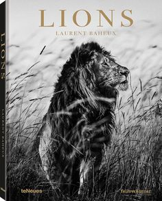 'Lions': stunning black-and-white photography in the new teNeues book by French photographer Laurent Baheux of lions in Africa... | Daily Mail Online