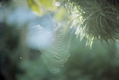 . by green_is_in, via Flickr