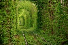 These Extraordinary Tunnels Look Like Gateways to Other Worlds - the Tunnel of Love, Klevan, Ukraine