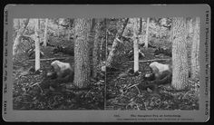 The slaughter pen at Gettysburg. [Stereograph]
