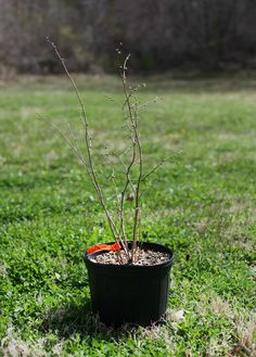 Small Measures: Tree Planting Basics