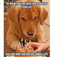 #dog by mr.annunaki