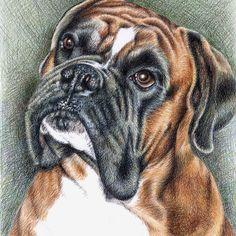 The Boxer Portrait