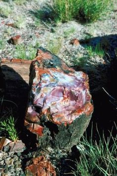 1000 ideas about agate rock on agates lake