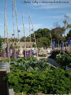 Woodend Primary School's (South Australia) Stephanie Alexander Kitchen Garden.