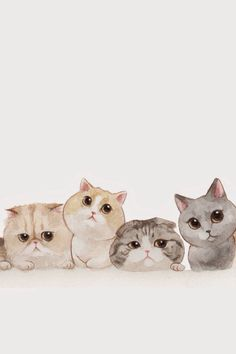 iPhone wallpaper #cats #kawaii #cute