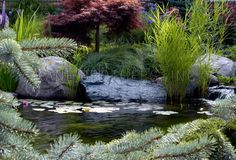 Evoke: Koi Pond Design, Waterfall Garden, Lily Pond, Aquatic Plants