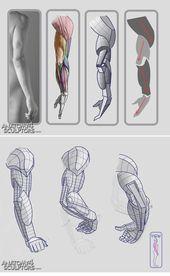 Arte Com Grey's Anatomy, Arm Anatomy, Anatomy Art, Human Anatomy, Arm Muscle Anatomy, Drawing Lessons, Drawing Techniques, Drawing Tutorials, Art Tutorials