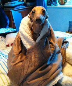 Bundled Up--Nope, not going outside, Mom!