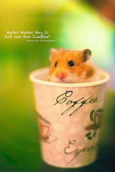138/365 Hamster.   Flickr - Photo Sharing!