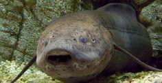 5 Rare Exotic Freshwater Tropical Fish for your Aquarium