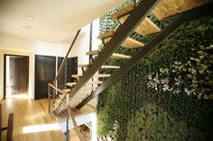 Green living interior wall:  Pickford Residence | Duvivier Architects | Archinect