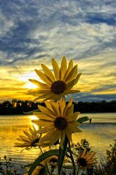 Beautiful sunset and  flowers