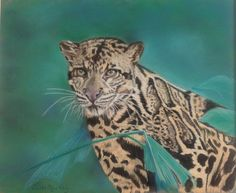 Stunning clouded leopard painted by www.judithmackay.com