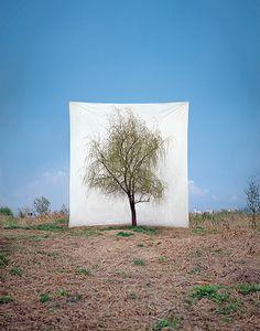 Los árboles de Myoung Ho Lee…