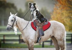 This Is A Dog That Rides Horses And It's Utterly Brilliant