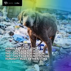 ❤️If you can't help them... please don't hurt them. What About Us supported by Zilliqa Challenge The Status Quo, Beautiful Love Stories, Stop Animal Cruelty, Ask For Help, Human Trafficking, Persecution, Storytelling, Love Story, Musicals