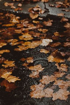 I love autumn and especially fall outfits ! Fall pumpking latte, fall inspiration, fall temperature, dead leaves and cold temperature ! Autumn Rain, Autumn Cozy, Autumn Leaves, Maple Leaves, Autumn Nature, Autumn Forest, Autumn Feeling, Autumn House, Autumn Coffee
