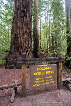 Armstrong Redwoods State Natural Reserve in Guerneville - California Through My Lens Guerneville California, Road Trip Usa, Northern California, State Parks, Coastal, To Go, Explore, Wealth, Places