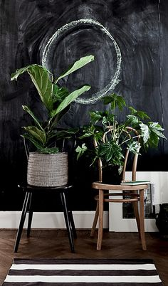 black wall and green plants.