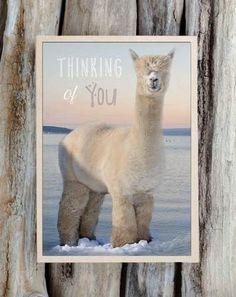 Alpaca Greeting Card - Thinking of You https://represent.com/kittenshirt