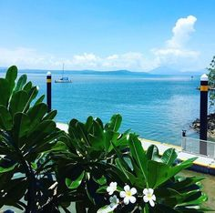 That's just to die for fantastic view(Port Douglas)