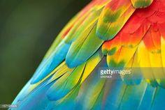 Znalezione obrazy dla zapytania parrot