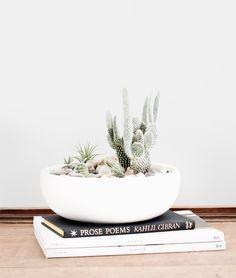 Studio Hours: Plants I can't kill | thevedahouse