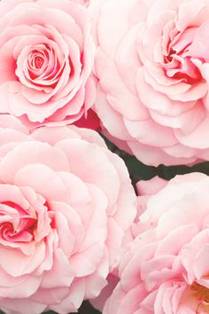 Beautiful pink flowers are perfect for any occasion, can easily brighten a room (or office), and are certainly something to be thankful for.