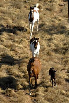 Wild Horse Population Control Forum in Australia | EQUUS Magazine