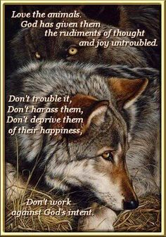 Quotes On Saving Wolf   WOLFS