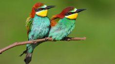 W płockim zoo zamieszkały żołny. Wkróce będziemy mogli podziwiać ich barwne upierzenie. http://tvnmeteo.tvn24.pl/informacje-pogoda/polska,28/w-plockim-zoo-zamieszkaly-zolny-wkroce-bedziemy-mogli-podziwiac-ich-barwne-upierzenie,147225,1,0.html