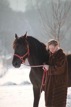 horse,winter
