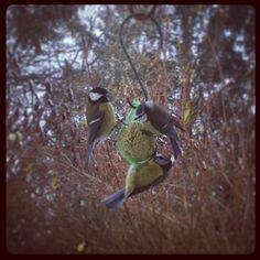 «#oiseaux affames»