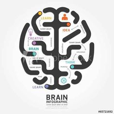 infographics vector brain design diagram line style template